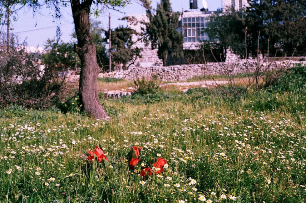 Tulips in Palestine, 2006, installation view. De Apple, Amsterdam, Holland