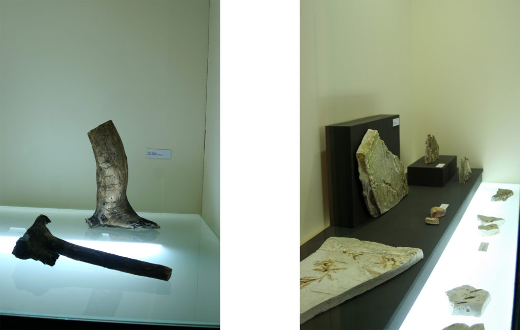 Geology and Palaeontology Department