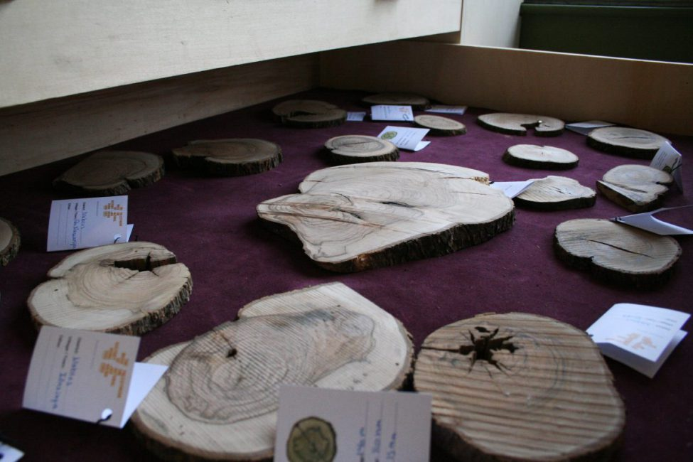 Botanical Department