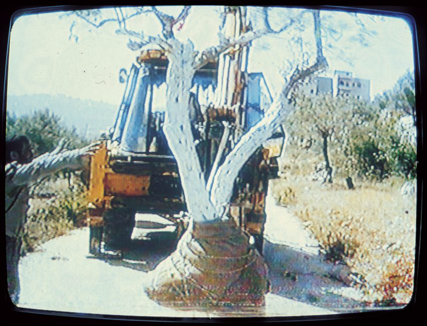 Grafting ,1995, video stills, Ramallah, Palestine